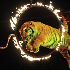 Цирки Нижнедевицка