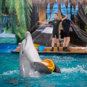 Дельфинарии, океанариумы Нижнедевицка