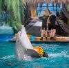 Дельфинарии, океанариумы в Нижнедевицке