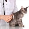 Ветеринарные клиники в Нижнедевицке